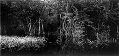 Balthasar Burkhard · Rio Negro, 2002, Fotografie auf Barytpapier, 125 x 250 cm