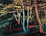 Adam Chodzko · Nightvision, 1998, Video, Zweikanal-Projektion