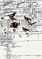 Gernot Wieland · o.T., Nr. 51, 2005, Kartoffeldruck, Tusche, Collage auf Papier, 42 x 29,7 cm