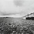 Jan Jedlicka · Maremma · Il Cerchio, 2005-2006, Fotografien, 40 Teile, je 34.5 x 36 cm