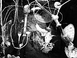 Steiner&Lenzlinger·«Le Jardin de lune», 2007