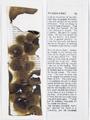 Vittorio Santoro, F. Dostoyevsky · Crime and Punishment (Penguin Popular Classics), 2007, zwei gerahmte Werke, Bleistift auf Papier, teilweise angebrannt, 22.5 x 7.5 cm, Courtesy Galerie Cortex Athletico, Bordeaux