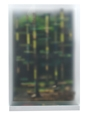 Hugo Suter · Malerei (Wald), 2007/08, geätztes Glas, Plexiglas, Acrylfarbe, Holz und diverse Materialien, 62.5 x 43 x 25.5 cm