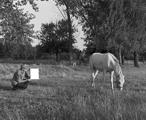 Bruno Jakob · Untitled (Horse), 2003. Foto: Peter Puntener