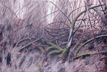 Wilfrid Moser · Kithäron, 1980, Öl auf Leinwand, 135 x 195 cm