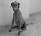 Christian Gonzenbach · Le meilleur ami de l'homme, 2009, Hund (St. Bernard), Taxidermie (Haut nach aussen gekehrt), 96 x 41 x 64 cm