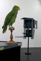 Denis Savary · Ausstellungsansicht, 2010, Centre d'art contemporain de la Ferme du Buisson. Foto: Aurélien Mole