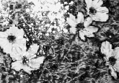 Adrian Schiess & Annelies Štrba, Summerending 30, 2011, Öl und Acryl auf Pigmentdruck auf Leinwand, 70 x 100 cm © 2011, ProLitteris