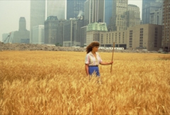 Agnes Denes · Wheatfield - A Confrontation: Battery Park Landfill, Downtown Manhattan, 1982