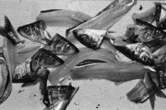 Michael Schmidt · Ohne Titel, # 17.169, aus Lebensmittel 2006-2010, Bromsilbergelatine Print, 54,1 x 81,6 cm