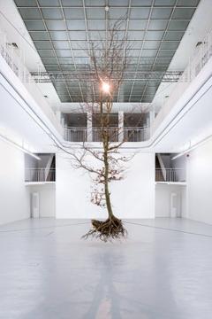 Henrik Håkansson · A Tree (Suspended), 2016, Installationsansicht Kunstverein Freiburg. Foto: Marc Doradzillo