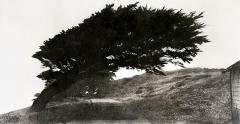 Jungjin Lee · aus Wind, 2007