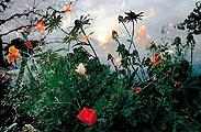 Alle Fotos: Ohne Titel, Überblendungsprojektion, 1997160 Einzelbilder