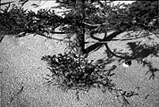 Anri Sala · Christmas Tree, 2002, Farbfotografie, Ed. 1/5 + 2 AP, 110 x 157 cm; Courtesy Galerie Hauser & Wirth, Zürich