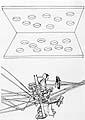 Alex Hanimann, Ohne Titel, schwarzer Kugelschreiber auf Transparentpapier, montiert, 42 x 29,7 cm