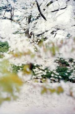 Thomas Flechtner ? Sakura, 2003, Fotoserie