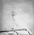 Luc Tuymans · Bird, 1998, Öl auf Leinwand, 68,5 x 68 cm