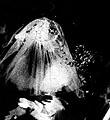 Lisl Ponger · Türkische Doppelhochzeit, aus Phantom fremdes Wien, 1991/2004, 5. Bezirk Kongresshalle, Foto