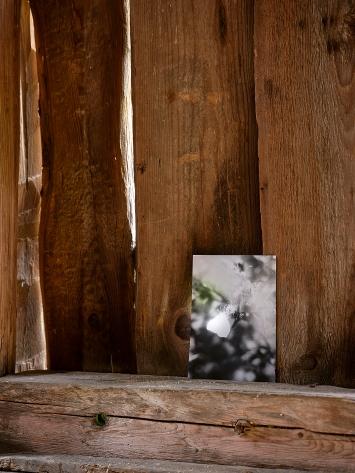 Jochen Lempert · Zitronenfalter, 2020, Installationsansicht Atelier Amden ©ProLitteris.Foto: David Aebi