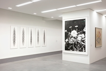 v.l.n.r.: Mirjam Beerli · Zentriert, 2018; huber.huber· Polarisierte Ringelblumen, 2010/2011, Courtesy Galerie DuflonRacz, Bern; Emma Kunz · Werk Nr. 410, o.J.; Ausstellungsansicht Kunsthalle Ziegelhütte Appenzell