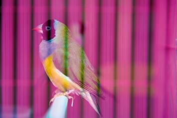 Nici Jost · Bird and Flower Market, Bird, 2018/21, 50 x 75cm, Chromalux Print