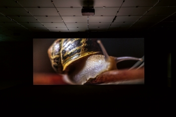 Anri Sala · If and Only If, 2018, Installationsansicht Kunsthaus Bregenz, 2021, Courtesy Galerie Chantal Crousel, Paris, und Marian Goodman Gallery ©ProLitteris.Foto: Markus Tretter