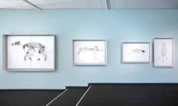 Michael Günzburger · Das Ende der Tierdruckreihe; Eisbär, Wildschwein, Biber (hoch und quer), Ausstellungsansicht.08.11.