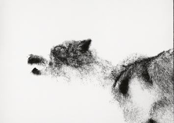 Michael Günzburger · Eisbär (Blatt A) 2017, Lithografie auf Papier, 75x105cm