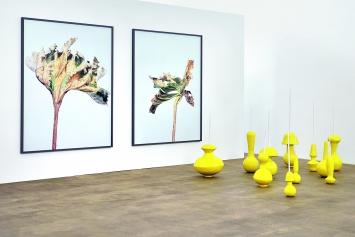 Fabien Clerc · Forest of Equilibrium, glasierte Keramik, 2019; Thomas Flechtner · Leaves, C-Print, 2017 (an der Wand), Raumansicht Kunstraum Medici Solothurn ©ProLitteris
