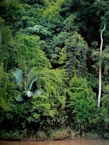 Christian Indermühle· Dschungel, Kalimantan, Indonesien, 2018, C-Print Ultrachrome, 45x60cm