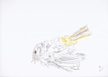 Leo Brunschwiler - «Rotschwänzchen»
