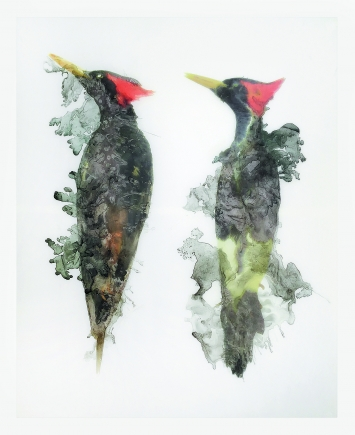 Woodpecker, 2018, Ultrachromtinte auf Polyethylen-Folie, 137 x 114,1 cm, Courtesy Hauser & Wirth. Foto: Emily Poole
