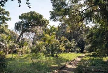 Orto Botanico, Palermo, Manifesta 12 Palermo Atlas, 2017, Courtesy OMA.Foto: Delfino Sisto Legnani