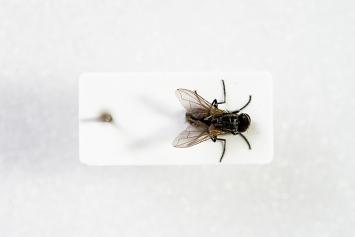 Fliegen retten in Deppendorf, 2012, artonomisches Experiment (Unternehmenswandel): Kunstaktion mit ca. 800 Menschen, 902 Fliegen und einem Insektenbekämpfer; Fliege Erika (Mitte).Foto: Jelena Gernert