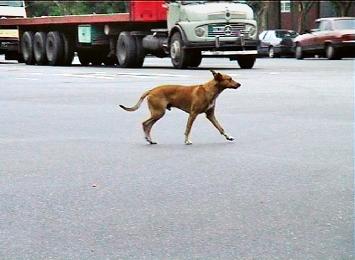 Eric Hattan · Dogslife, 2003, Videostill