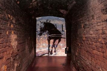 Ursula Palla · The horse, 2013, Videoprojektion.Foto: Urs Baumann