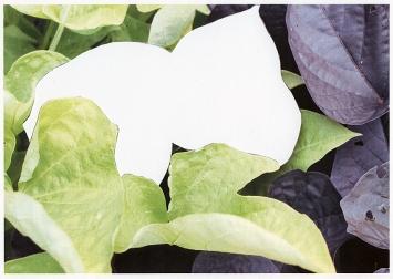 Milena Bonderer · Schnittbilder (Abwesenheit/The Missing Piece), 2018/19, 47x68cm, Papierschnitt, Laserprint
