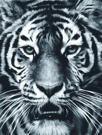 Robert Longo · Untitled (Tiger Head No.7), 2012, Kohle auf montiertem Papier, 232x176cm, Sammlung Würth