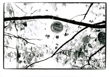 Armand Schulthess · Botschaften auf Blechdecken, ca. 1970.Foto: I. Lüscher ©ProLitteris