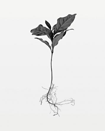 Thomas Brasey · Kaffee, aus der Serie ‹Boa-ventura›, Schwarzweissfotografie