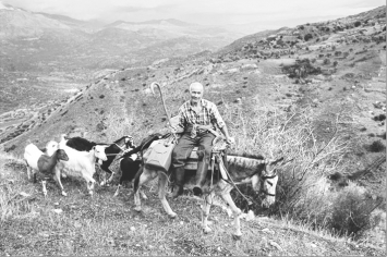 Wolfgang Bernauer · Jorgos, nach dem Auslegender Netze für die Olivenernte auf derRückkehr ins kretische Dorf, 2002, Schwarz-Weiss-Fotografie