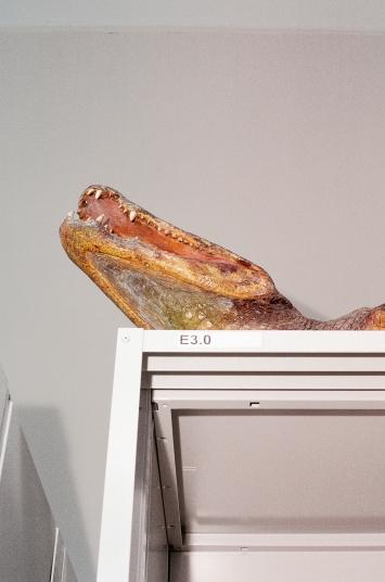 Haunting Home, 2019, Analogfotografie, Naturama, Aarau, Inkjet auf Alu, 135x90cm