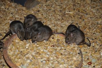 Von Mäusen und Menschen © Barbara König