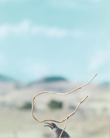 Jean-Luc Mylayne · N° 524, Février Mars Avril 2007, 228x183cm, Courtesy Mylène & Jean-Luc Mylayne; Gladstone Gallery, New York, Bruxelles; Sprüth Magers, Berlin, London, Los Angeles