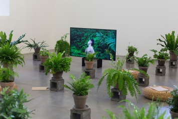 Zheng Bo·Pteridophilia 1, 2016, Videostill, Courtesy der Künstler und Edouard Malingue Gallery; Fern as Method, 2019, Courtesy der Künstler und Kyoto City University of Arts, Kyoto. Foto: Anaïs Stein