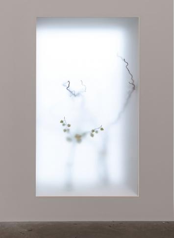 Rue Pont-aux-Choux. 2017, Pflanzen, Glas, Holz, 190x110cm, Ausstellungsansicht.Foto: Réne Rötheli