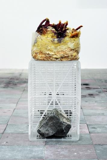 Unfinished Business, (Ling Zhi) V, 2016, chinesischer Anti-Aging-Pilz für Unsterblichkeit, gefundene Plastikkisten, gefundene Steine, Masse variabel. Ausstellungsansicht Ginerva Gambino, Köln